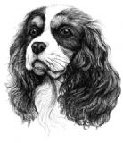 Cavalier King Charles Business Cards